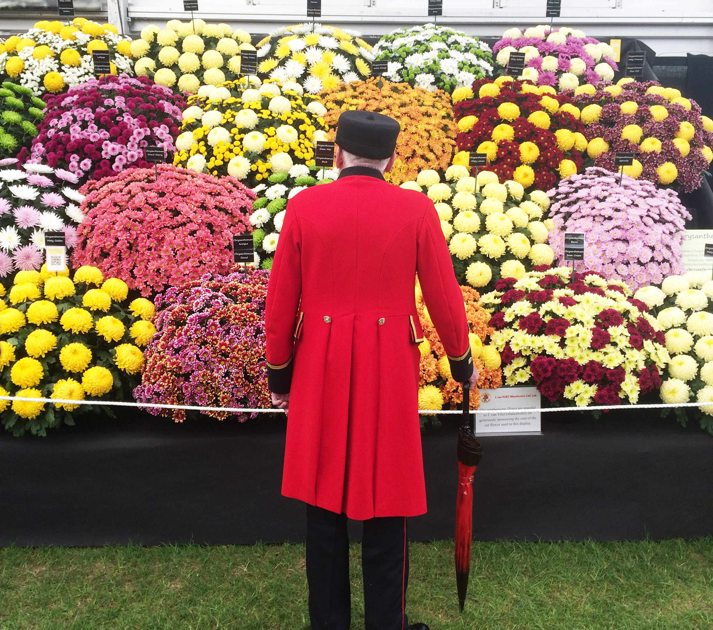100 years of the chelsea flower show royal hospital chelsea - Royal flower show ...