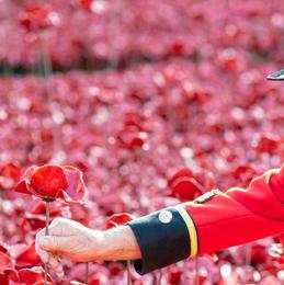 Poppy Field Remembrance